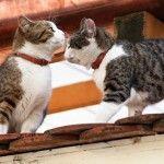 Katzen in Hard vergiftet