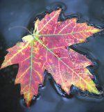 Um 4.29 Uhr hat der Herbst begonnen