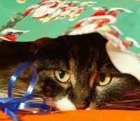 Wenn Tiere unter dem Weihnachtsbaum landen