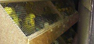 Vogelgeschrei in Wien-Penzing: Pkw mit 1.200 Ziervögeln gestoppt