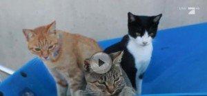 Video: Eine Insel voller Katzen im Süden Japans