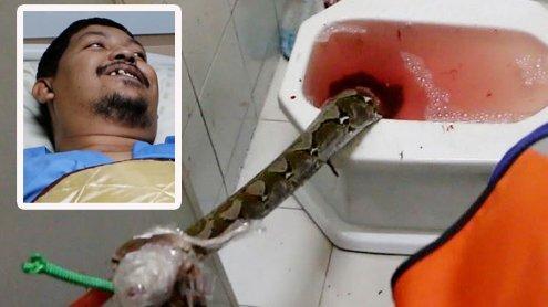 3 Meter-Python beißt Mann indenPenis als er auf dem Klo sitzt