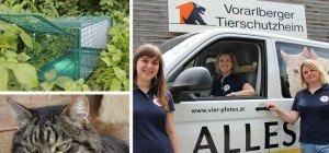"""Tierschutzheim und """"Vier Pfoten"""": Mit Lebendfallen gegen Streunerkatzen"""