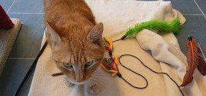 Aus dem Alltag der Wiener Katzenflüsterin Petra Ott: Vom Pfaucher zum Schmuser
