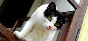 Aus dem Alltag der Wiener Katzenflüsterin Petra Ott: Fenstersturz nach Hetzjagd