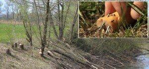 Tierschützer warnen – Hundehasser legten Nagel-Köder aus!