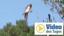 Eichhörnchen rettet sich mit Stunt-Einlage
