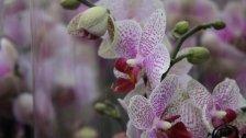 Die Orchidee im VOL.AT-Gartentipp