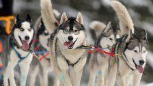 Hunde-Gespann sorgte für Suchaktion in Bangs