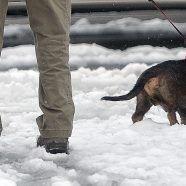 Vorarlberg: Tierquäler verurteilt