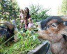 Kult seit 1963 in Vorarlberg: Der Doppelmayr-Zoo in Wolfurt
