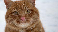 Vermisst im Schnee! Katzenjammer im Ländle
