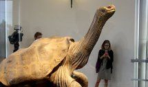 """Lonesome George"" kehrt nach Galapagos zurück"