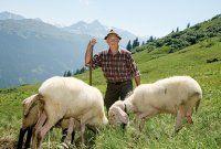 Lammfleisch mit Ländle Gütesiegel
