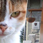 Anklage: Katze grausam getötet