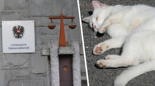 Tierquälerei: Geheimprozess um grausam getötete Katze