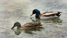 Wer Enten & Co. mag, füttert sie besser nicht!