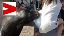 Schock: Seelöwe reißt Mädchen ins Wasser!
