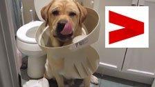 Wenn Hunde auf frischer Tat ertappt werden