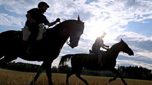 Pferd hielt Versprechen nicht – Käuferin bekommt Geld zurück