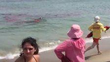 Horrorszenen: Haiattacke richtet riesen Blutbad an