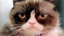 Grumpy Cat war gestern - hier kommt Grumpy Baby
